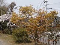 P3231012